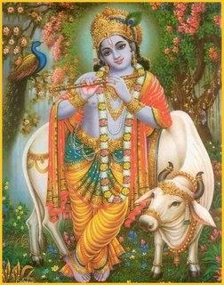 Legile care ne guvernează - Krishna şi Vaca Sacră