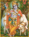 Evolution, Involution, Revolution - Krishna and the Sacred Cow