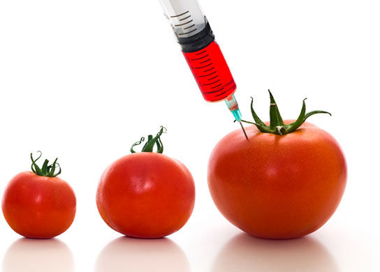 OGM: guadagno e dipendenza