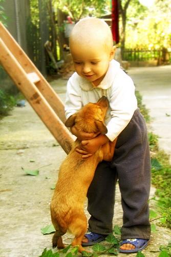 El Valor de la Amistad - Amistad: Hombre y el perro
