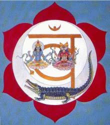Le Sette Chiese - Chacra Svadistana, Kundalini
