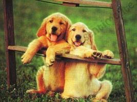El Valor de la Amistad - Amistad del canos