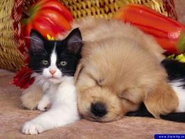 El Valor de la Amistad - Amistad: Gata y el perro