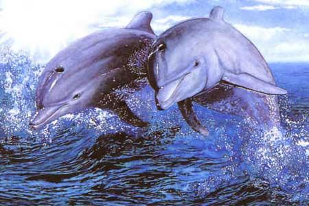 El Valor de la Amistad - Amistad:Delfines