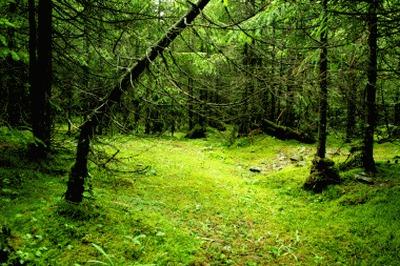 Putanja u šumi