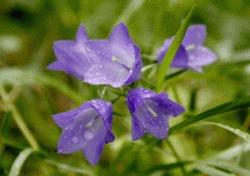 Lepota prirode, Cvet