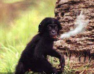 Maimunsa cigaretom - Čista Nauka, evolucija, evolucionizam, dogma evolucije
