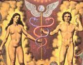 TIKUN HABRIS — Regeneracija semena